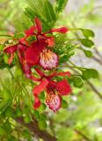 Flores Cuitzeo