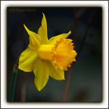 A Daffy Dill, From The Loving Nut Who's Always In A Time PickleHappy 10th Hannah!!