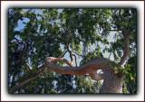 Winding Toward Light - An Anaconda Posture
