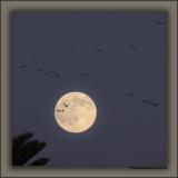 Hunter's Moon '09
