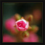 A Priority Of Spring - An Aperture Of Desire