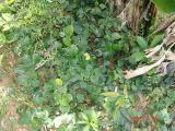 Nam Cat Tien - DSC00065