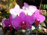 Montreal: Thú Chơi Lan - Orchids for fun