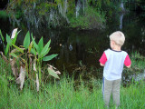 Looking for gators