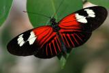 SIPS St.Louis Butterfly House