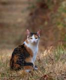 P1044219 Molly cat oginal 800.jpg