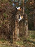 P1044184 Molly cat pole 800 original.jpg