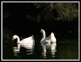 Quack...by Carlo