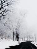 winter wonderland - Tom