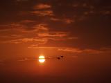 C116 >> Flight << - hosted by Brenda