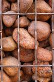Pet Rocks In Jail  Garry Frankel