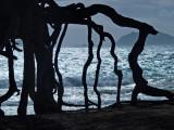 beach erosion survivor