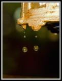 Drip, Drip..by Carlo