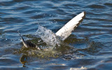 Gull, Not Fish by Private Custard