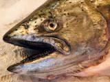 Pike Place Market - fresh fish