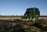 Cotton Harvest - Nov 2008