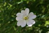 Duke Gardens - May 2008