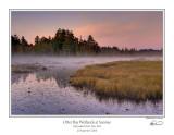 Otter Bay Wetlands.jpg