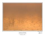 Sunrise on Reeds.jpg