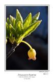Ericaceae in Sunrise.jpg