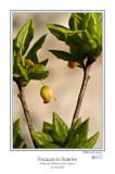 Ericaceae in Sunrise 2.jpg