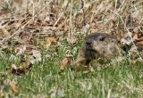 Can You See Me? or The Bodyless Woodchuck