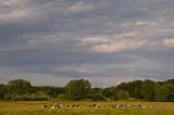Pastoral Evening