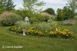 Daylily, Grass Garden to Divide the Yard