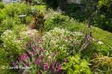 Septic Tank Garden