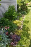 Garden Across from Septic Tank Garden
