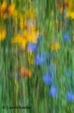 Summer Wildflower Delight