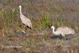 2010 Montezuma Muckrace Birds