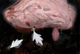 Rock In Bird Bath