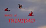 BIRDS OF TRINIDAD
