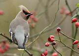 Birds N - T