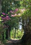 A beautiful woodland path.