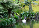 This swan lives in one of the most beautiful places on the planet