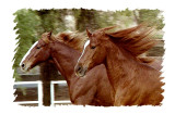 Red & Jessee at the Morning Star Ranch in Poway