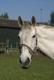 Luna, Susie and Gijs have arrived at EquiLuck