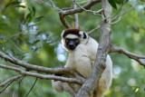Madagascar - 2007