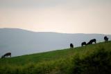 Hill Top Donkeys
