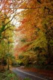 The Deerpark in Autumn