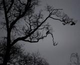 Dark December Days
