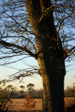 Bare naked tree