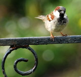 The Sparrow on the Gate