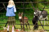 The donkey family