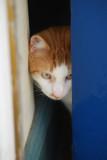 Peeping round the door