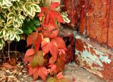 Autumn creeps upon  us