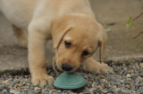A good chew