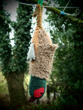 Hanging the Pheasant